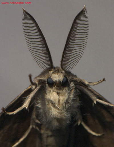 900_moth