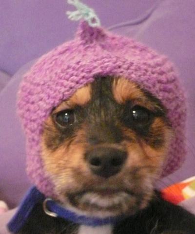 Free Knitting Pattern For Dog Balaclava : The Anti-Firework Dog Balaclava Muir & Osborne