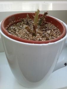 cup_cactus