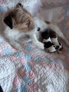 violet-puppies