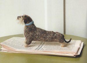 Wireharied dachshund web