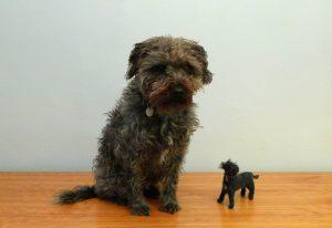 big_dog_small_dog