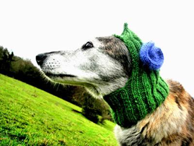 The Anti Firework Dog Balaclava Muir Osborne